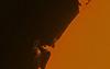 Sole di Ferrago