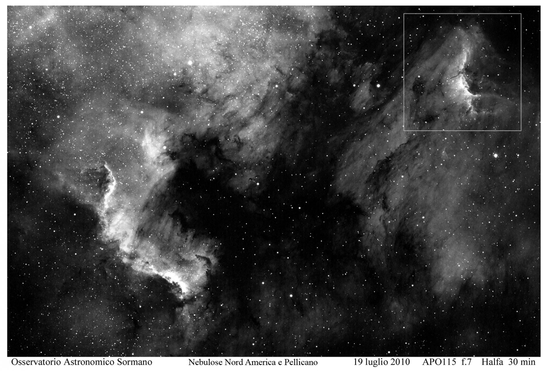 Foto Osservatorio  - Una nursery a forma di pellicano